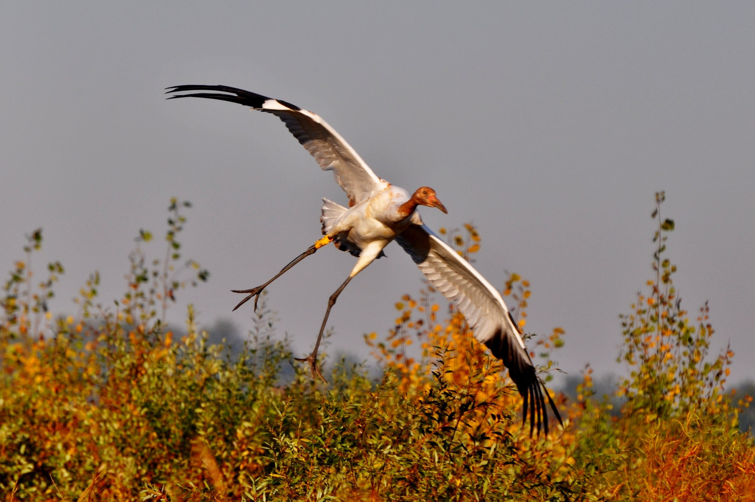 (CANCELLED) Whooping Crane &  Nature Festival